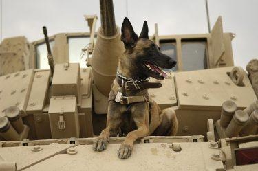 今の軍用犬(K9)は凄い!特殊軍用犬は特殊部隊と一緒に空も飛ぶ