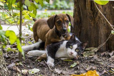 あなたのペットも特殊部隊⁉米国防総省規格の犬猫用プレートキャリア