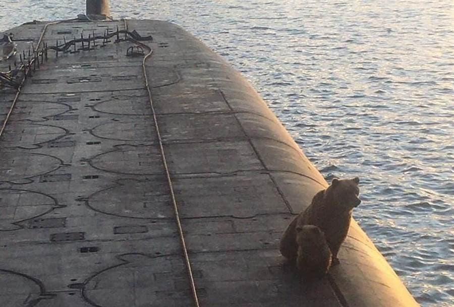 ロシアの潜水艦にヒグマの親子。来た場所が悪かった...